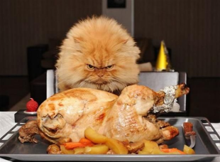 grumpy-thanksgiving-cat