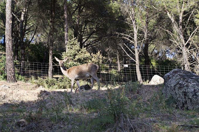sierra de anduja ciervo