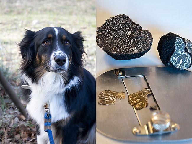 drome-truffle-hunting