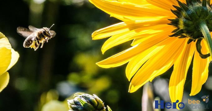 Hero bee careful