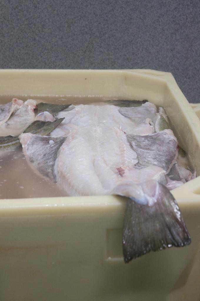 todo lo que debes saber sobre el bacalao